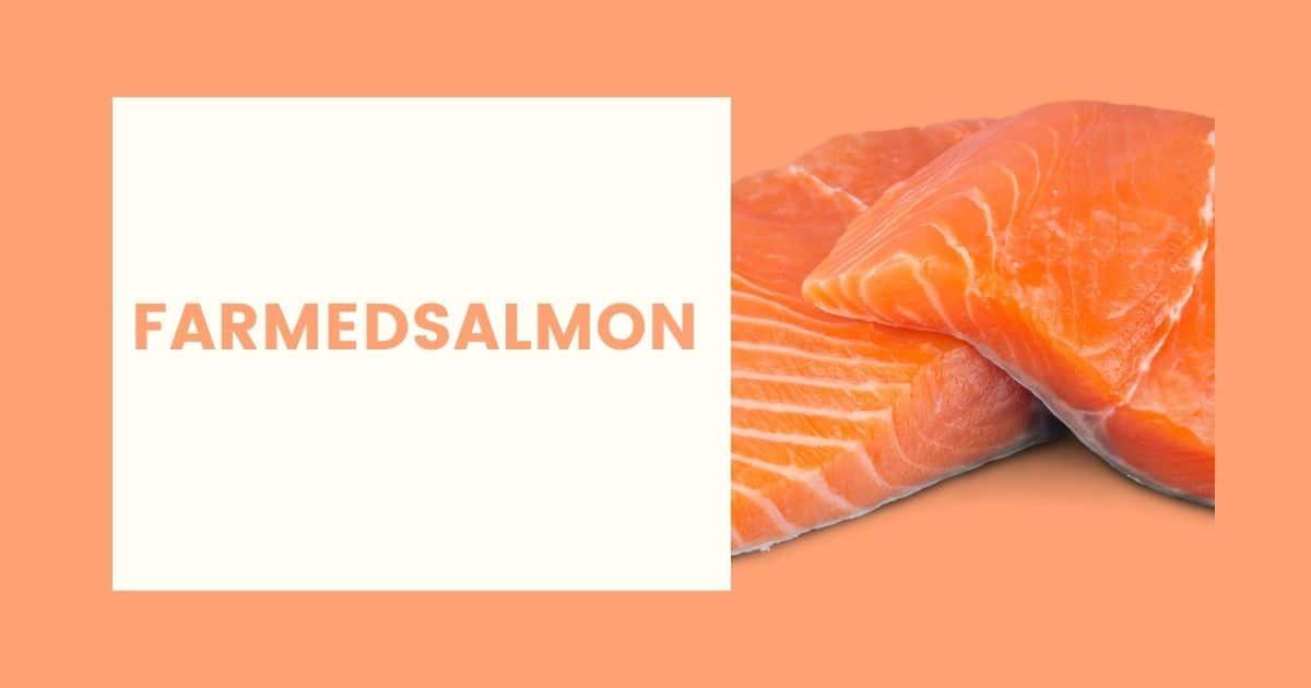 two farmed salmon fillets