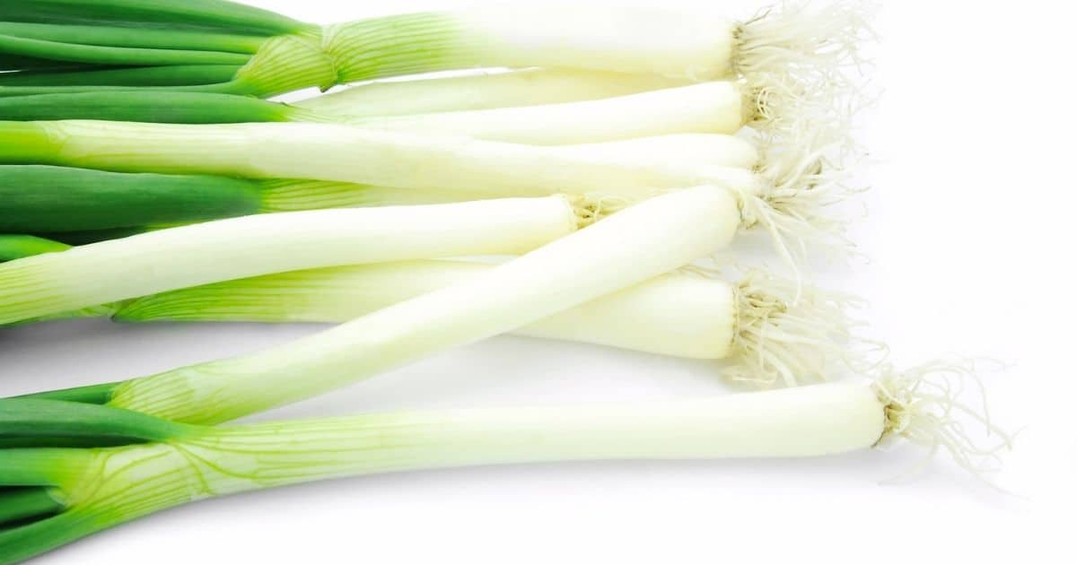 Green onion scallions on a white surface