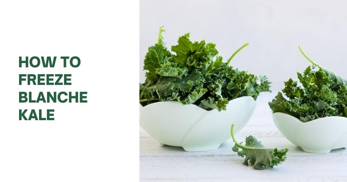 Two white bowls of different sizes both filled with Kale