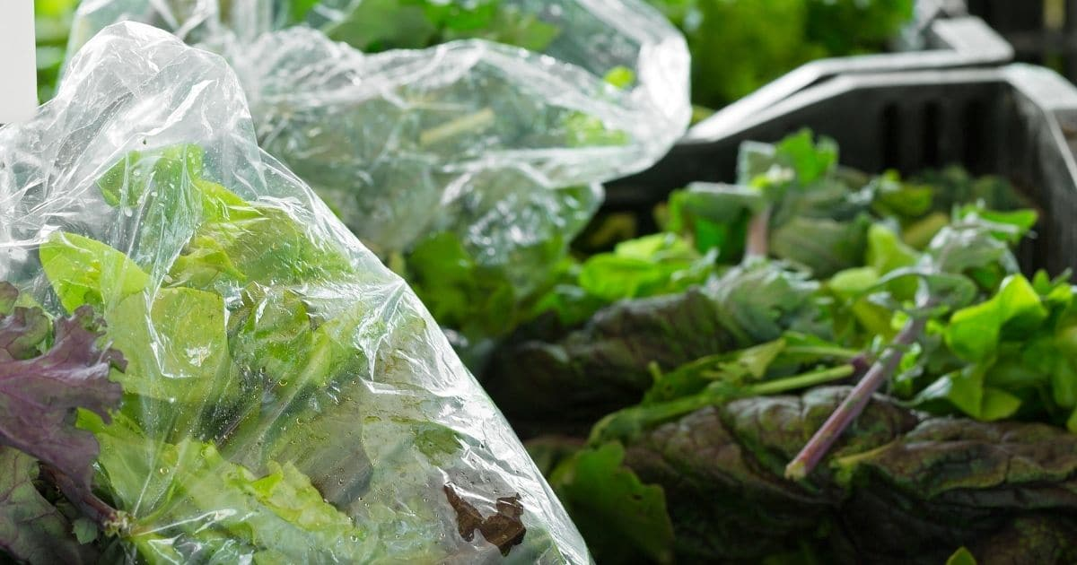 Kale inside plastic bags