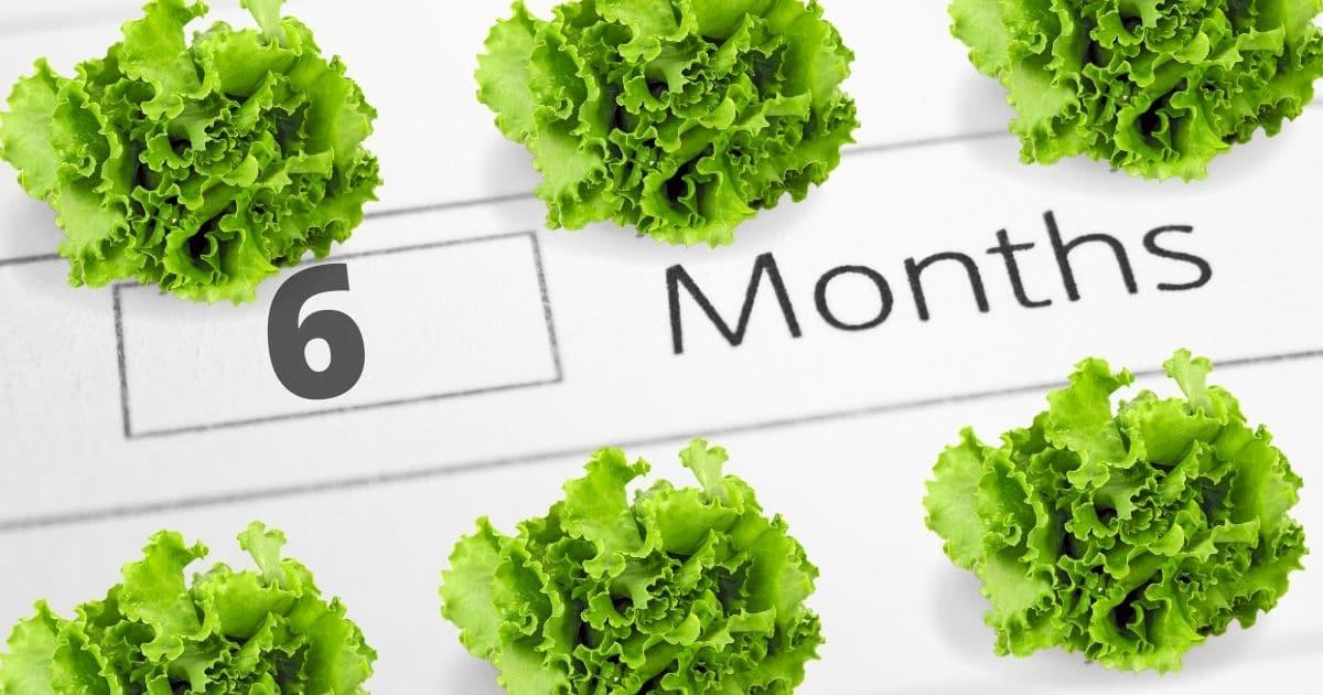 Lettuce-BP_14