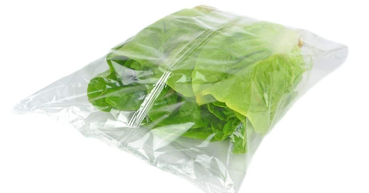 Vacuumed sealed lettuces'