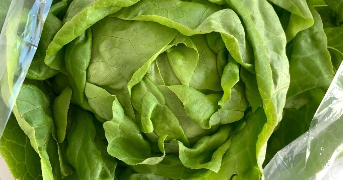 freeze bag lettuce