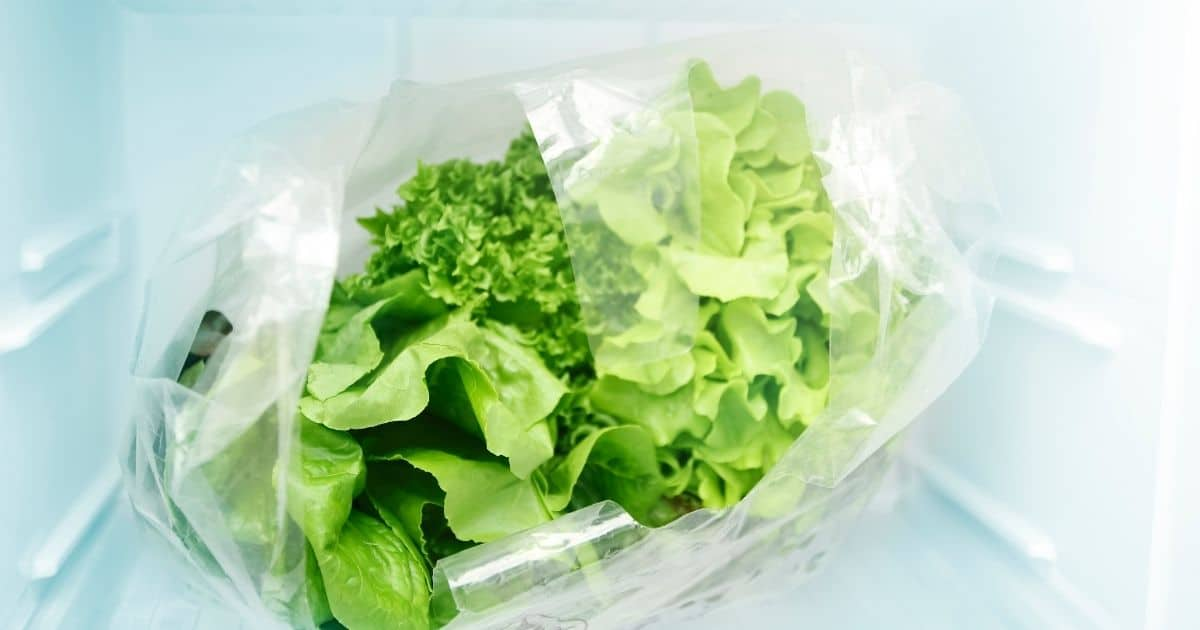 when to freeze lettuce