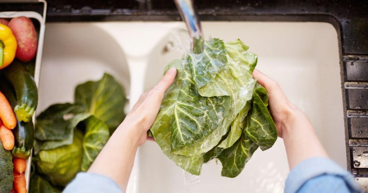 Cabbage being washed