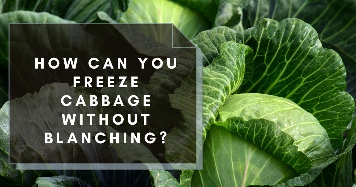 """Raw cabbage and the words """"how can you freeze cabbage without blanching?"""""""