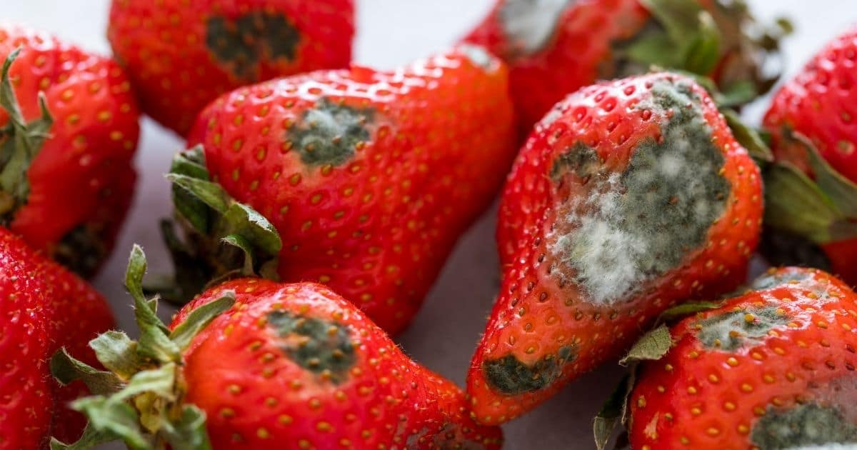 Moldy strawberries