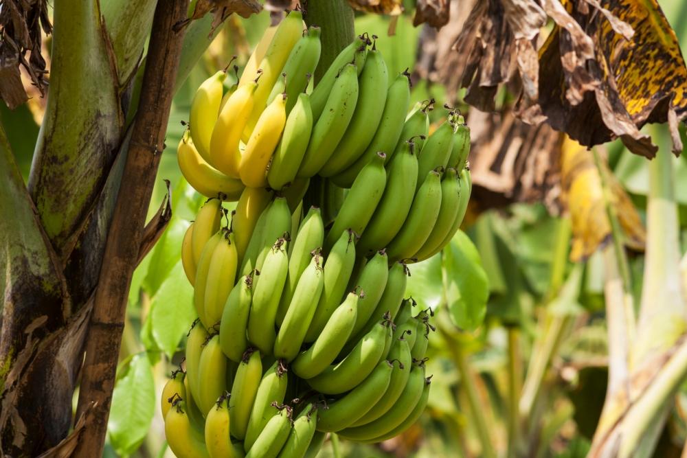 Banana back spots