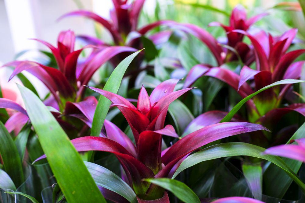 Bromeliads (1)