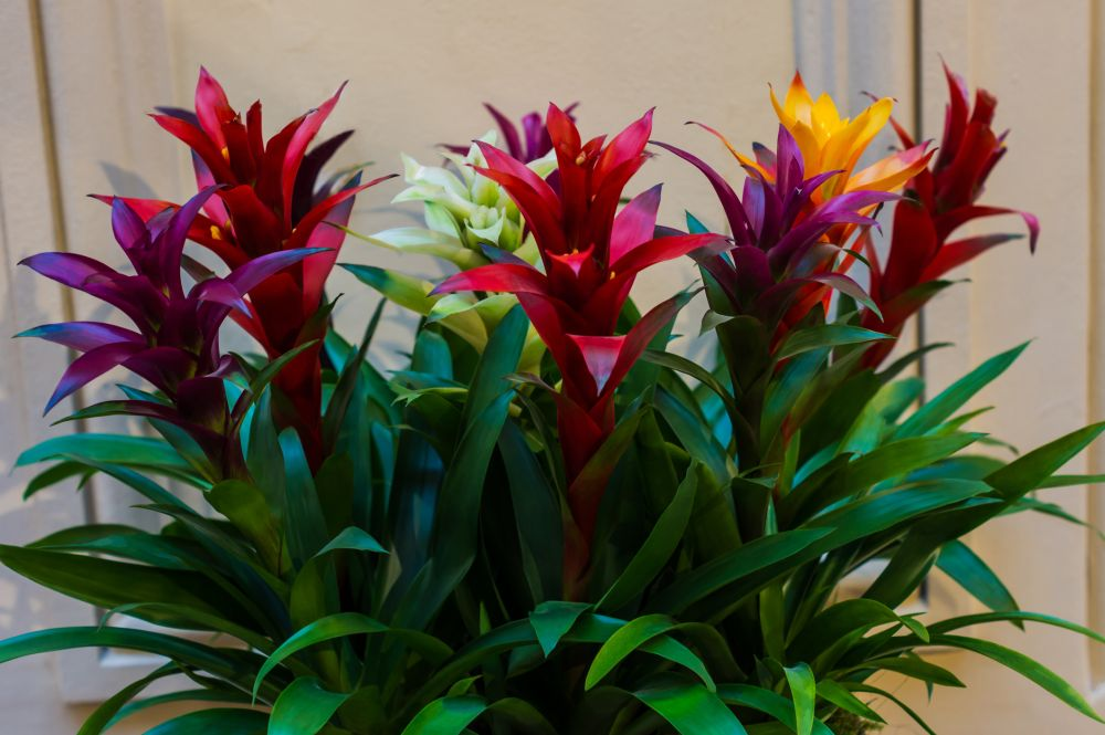 Bromeliads (2)