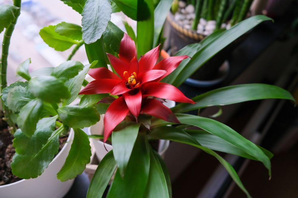 Bromeliads (6)