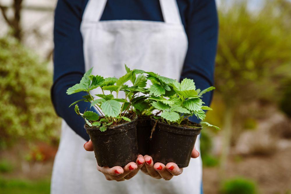 Berries pot (1)