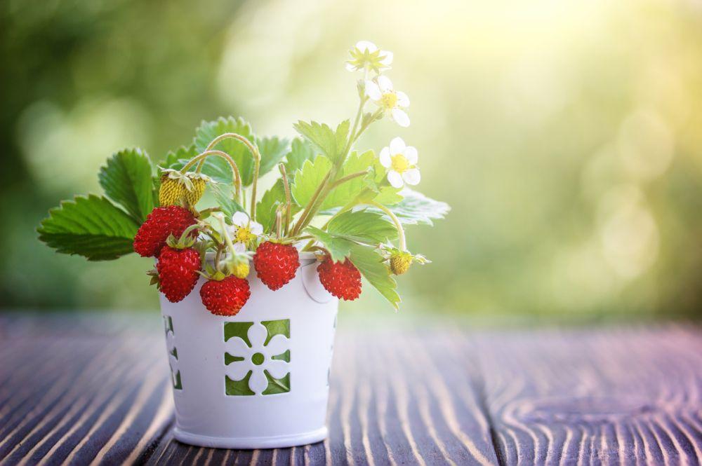 Berries pot (3)