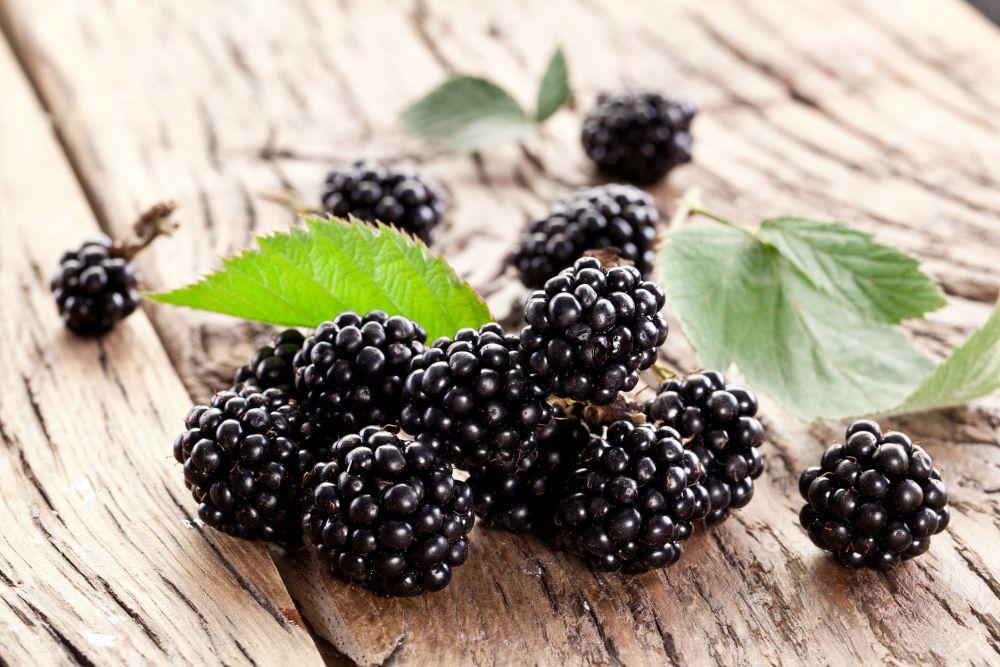 Blackberry (4)