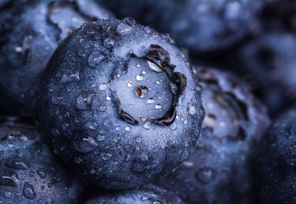 Blueberry problems 5