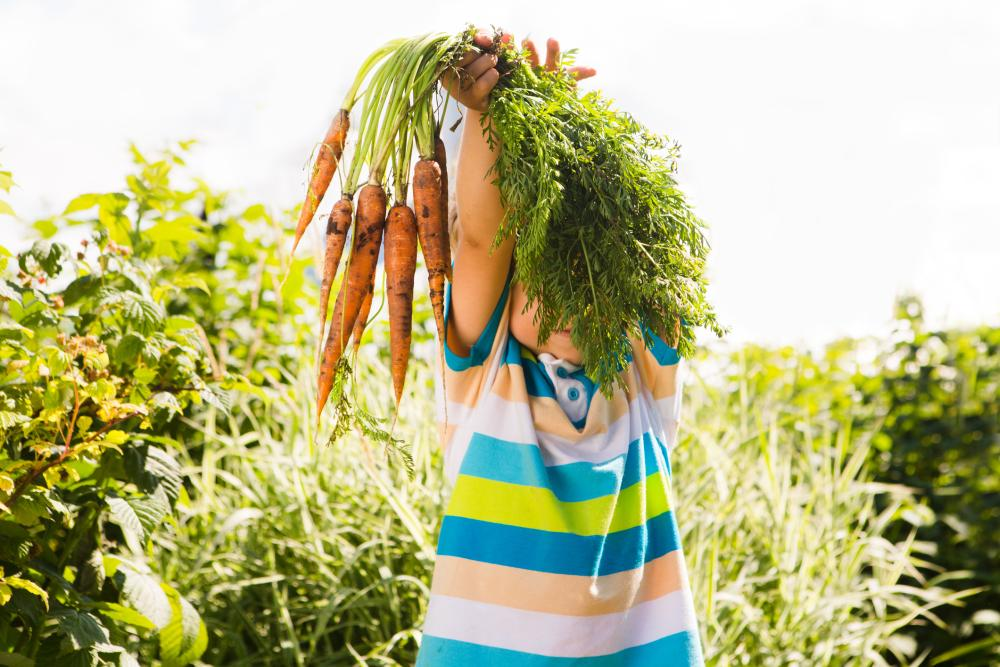 Grow and harvest carrots (1)