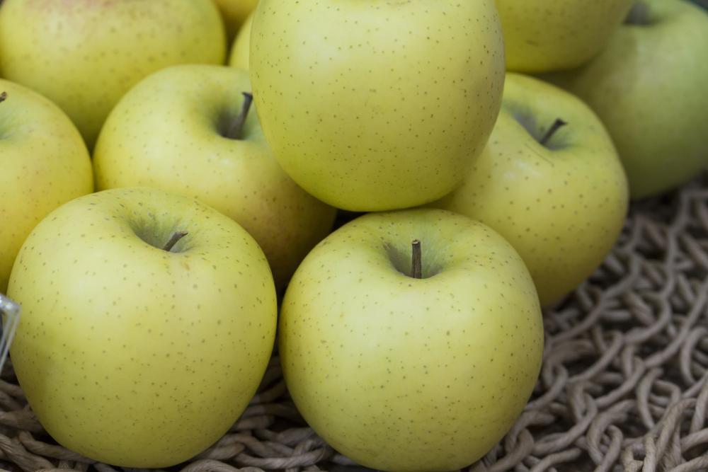 Shinano gold apples