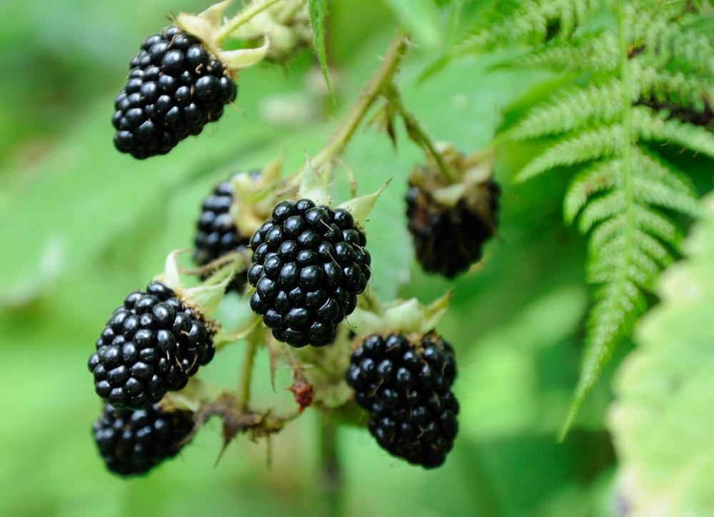 Blackberry problem (3)