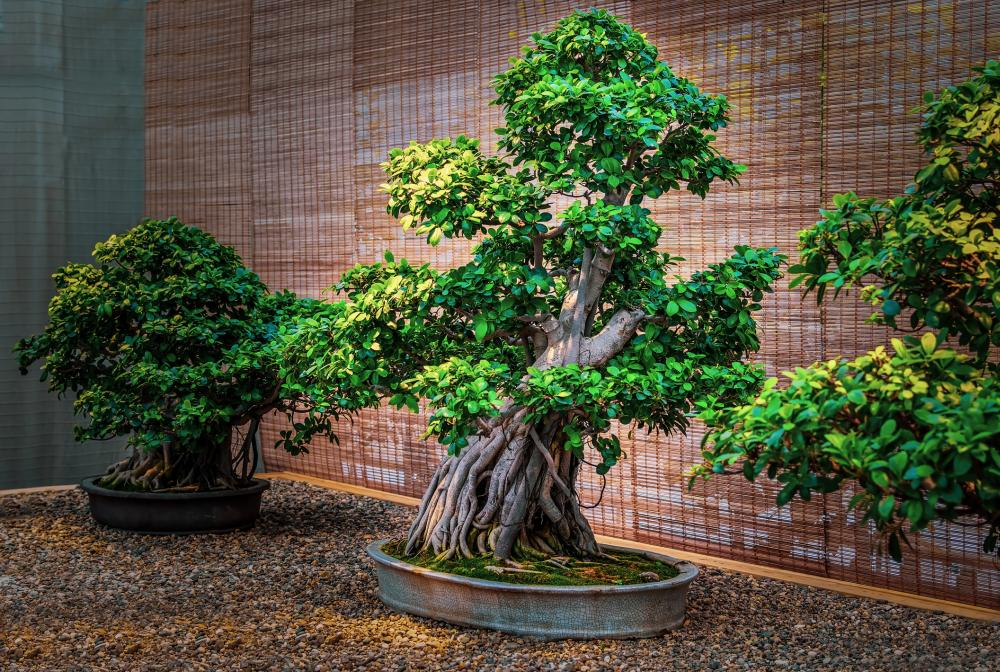 Bonsai tree (1)