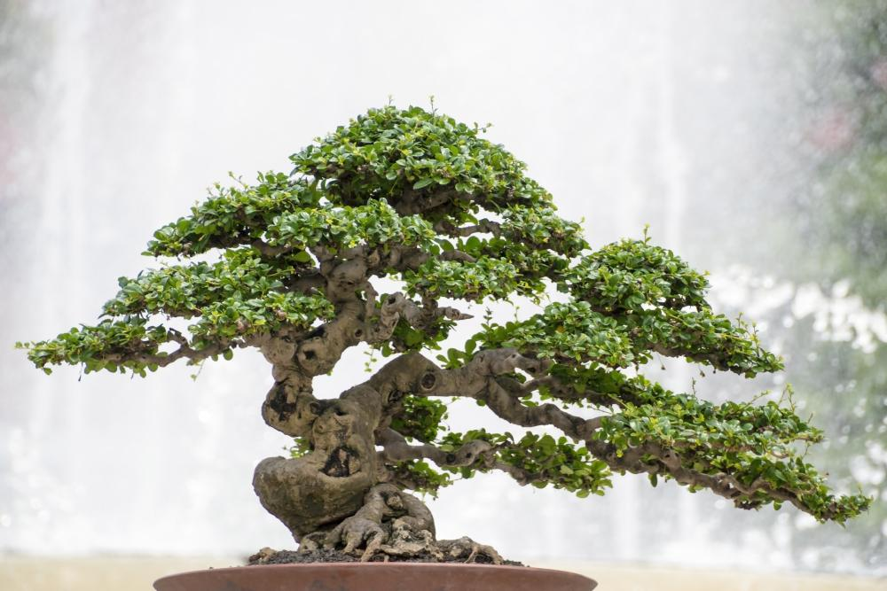 Bonsai Tree Growing Problems And Solutions