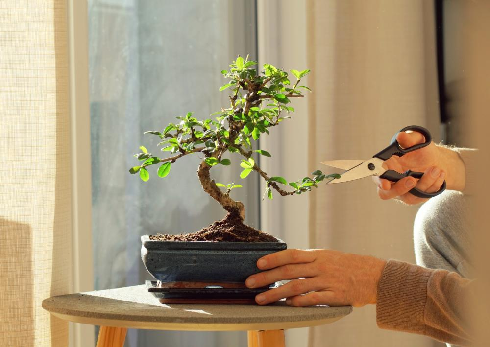Pruning and the Bonsai Tree