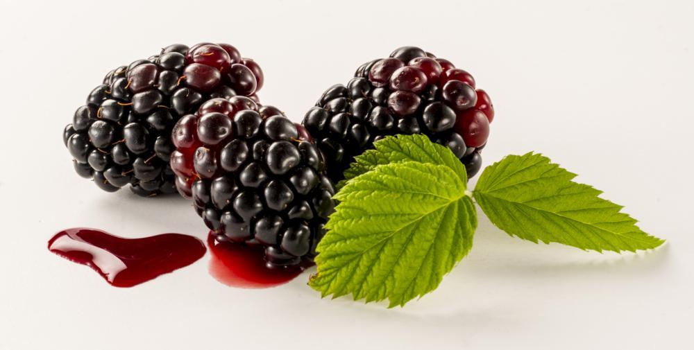 Boysenberry growth (1)