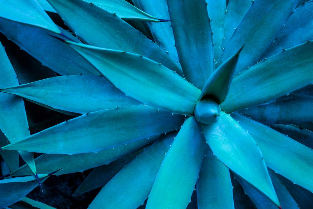 Pros and Cons of Agave