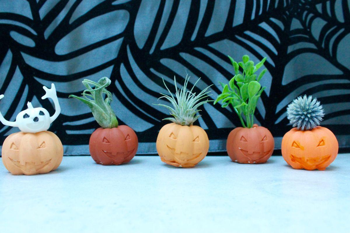 Halloween party decoration ideas pumpkin air plant holder