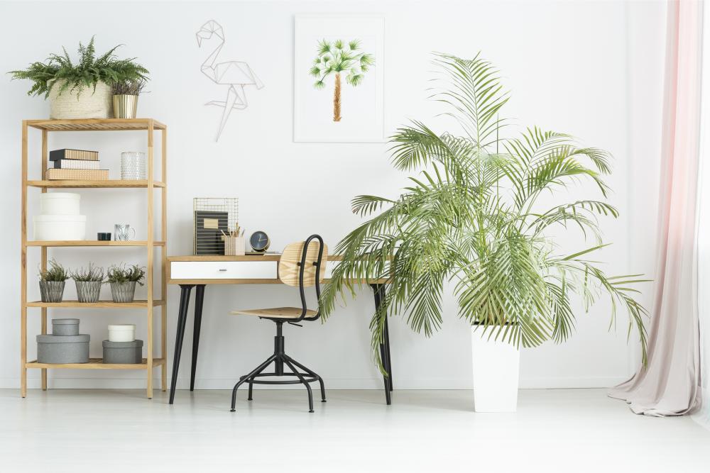 Indoor palm varieties