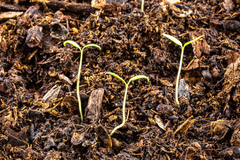 Soaking seeds tips