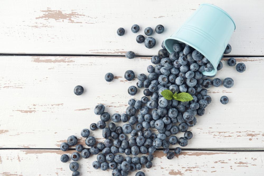 Blueberry varieties lowbush blueberry