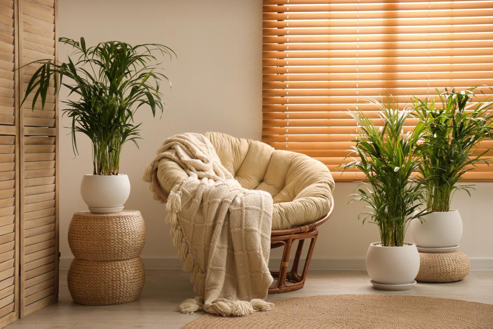 areca palm varieties