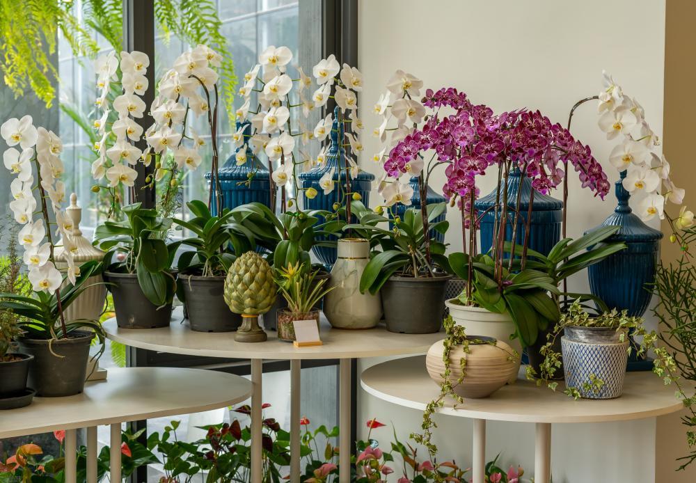 Grow indoor orchids