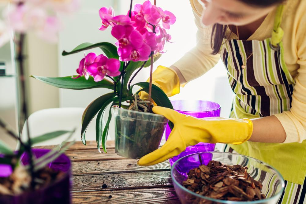 Growing orchids propagating
