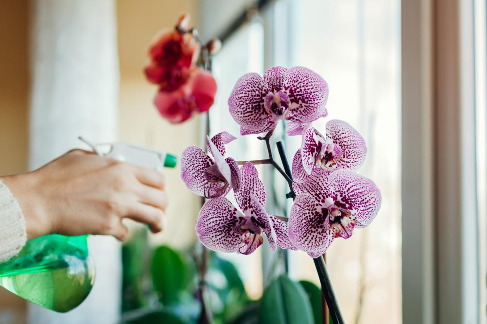Orchid growing watering