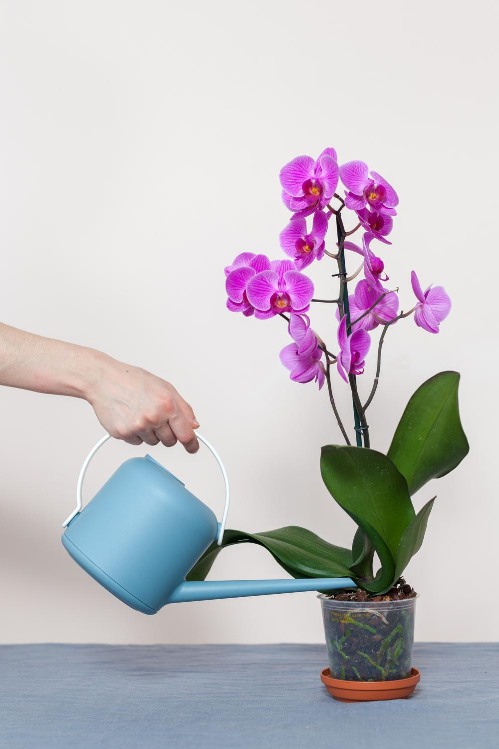 Orchid problems winter orchid requirements