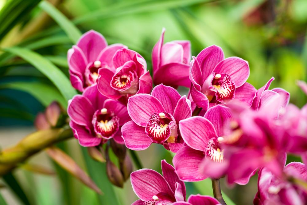 Orchid varieties catasetum orchids