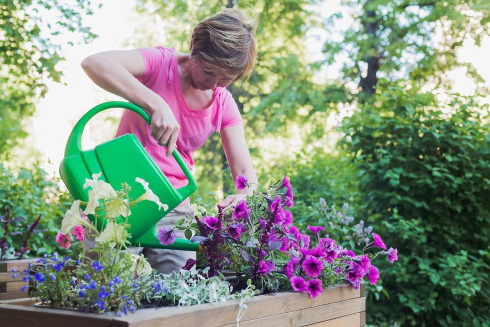 Petunia growing problems leggy