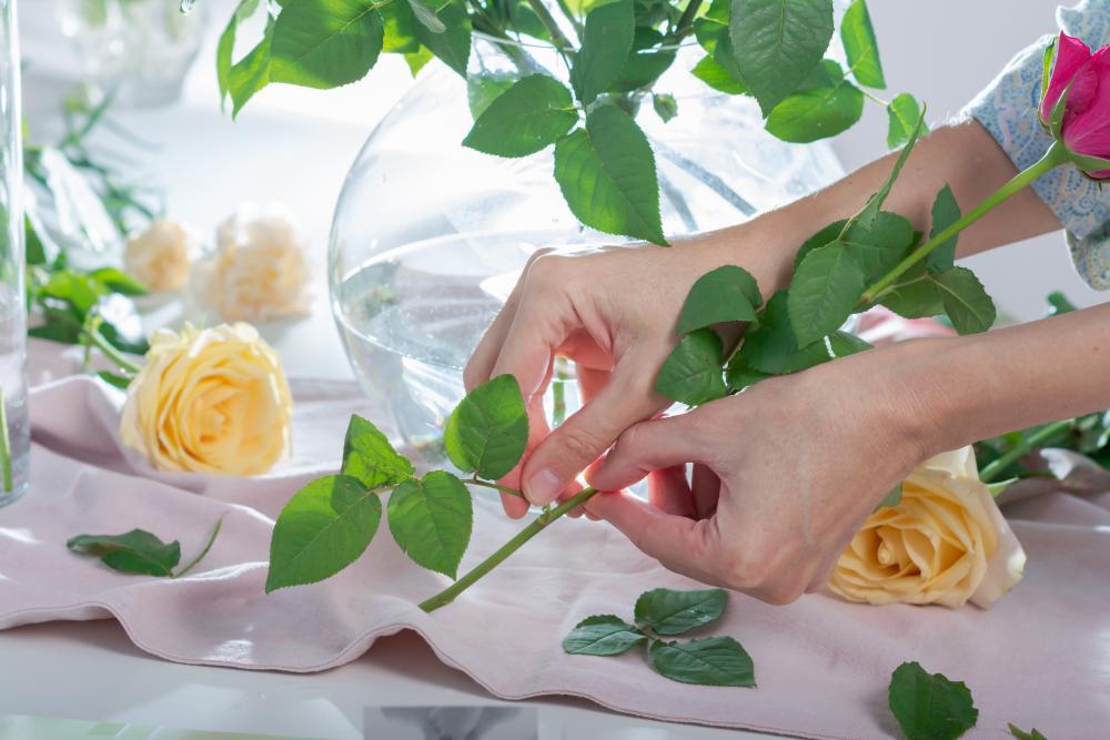 Rose problem water growing